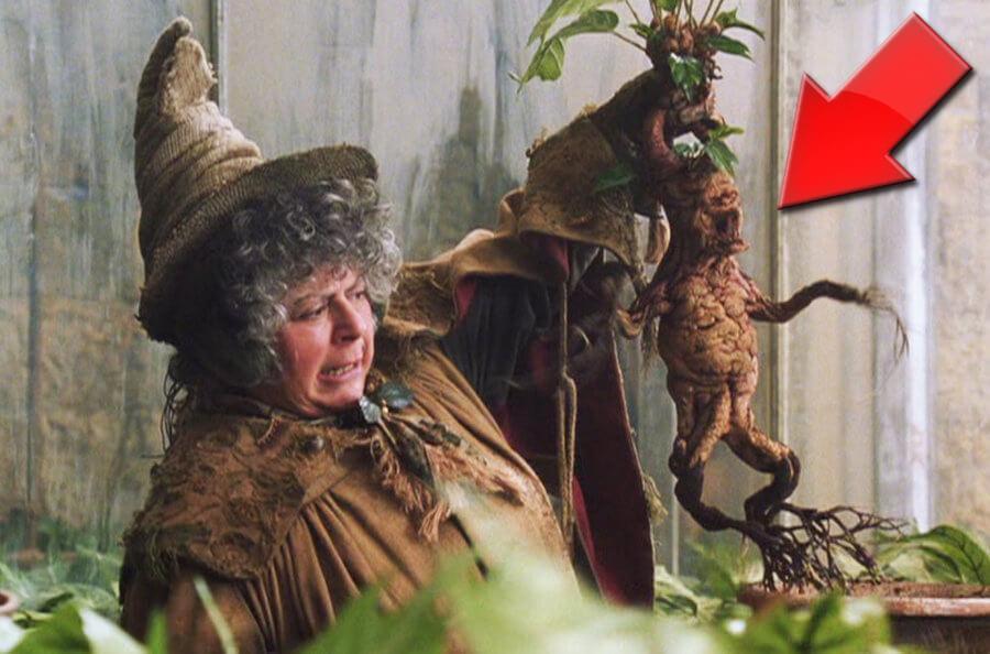 Mandrágora, la Planta Mágica que Grita y Llora - Tierra de Misterios